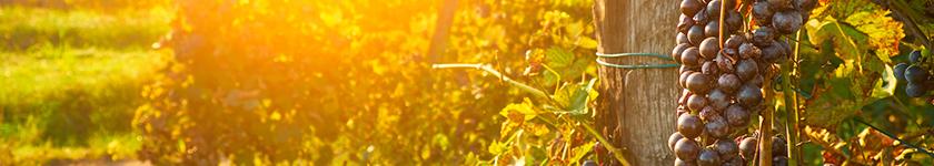 'Natuur'wijnen uit Portugal