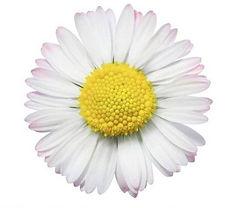 TRR Logo Daisy.jpg