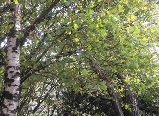 It's still with me (Forest Bathing Blog)