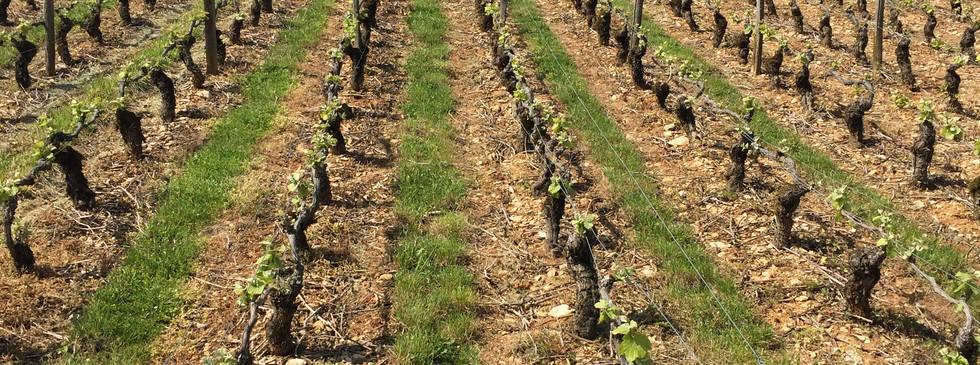 Distillerie en Bourgogne