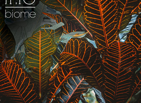 """New Single """"Biome"""" Available !"""