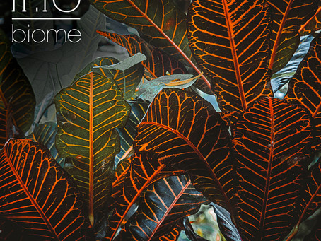 "New Single ""Biome"" Available !"