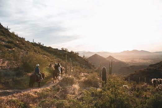 resort horses.jpg