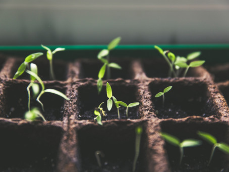 How to Plan for Growth as a Small Business Owner