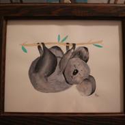 Kozy Koala