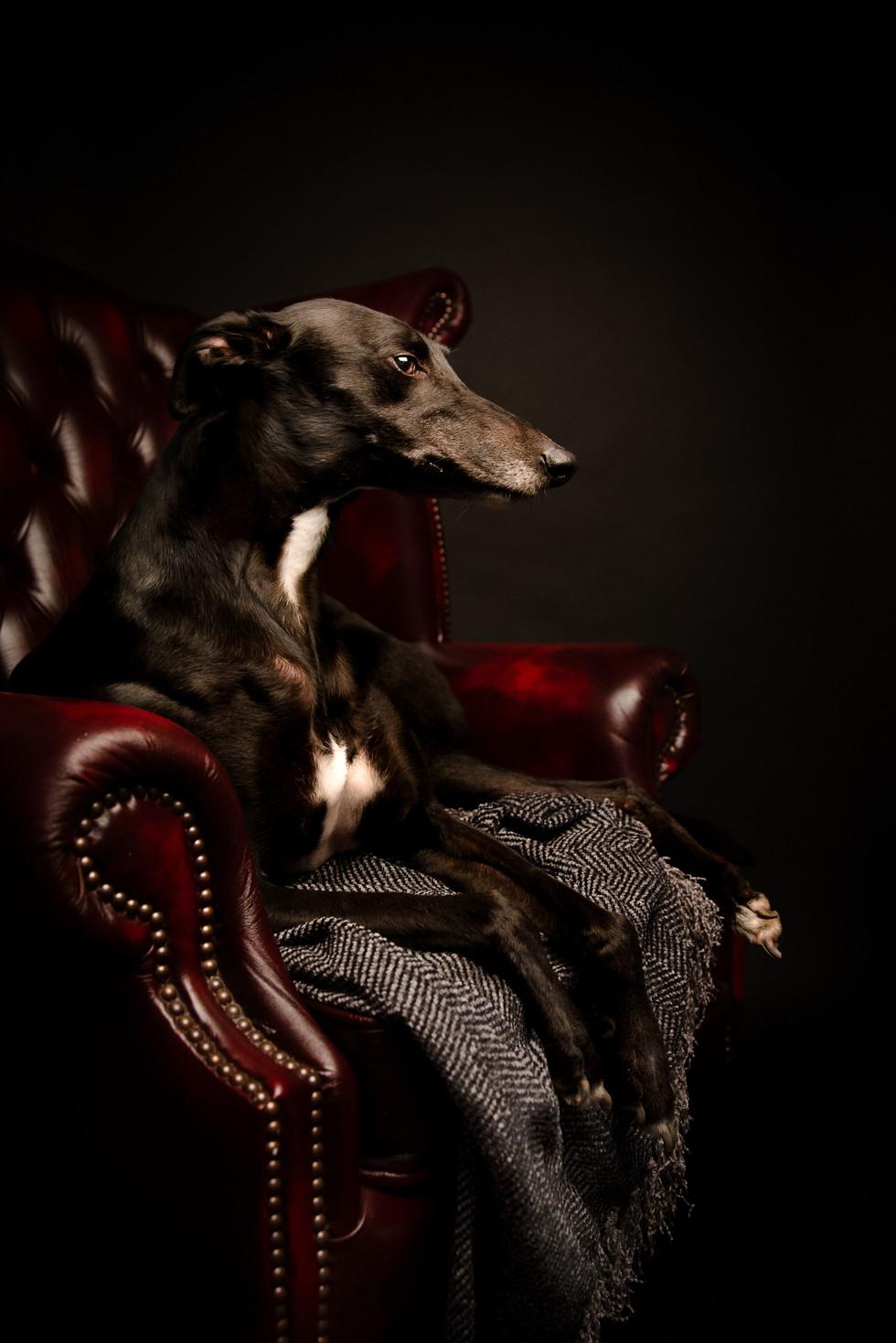 Low Key Greyhound
