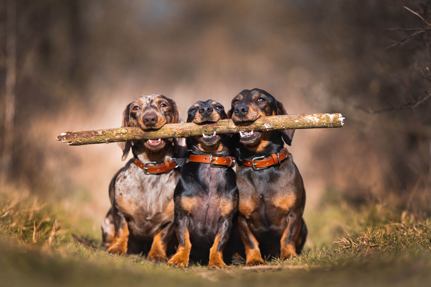Sausages with Stick
