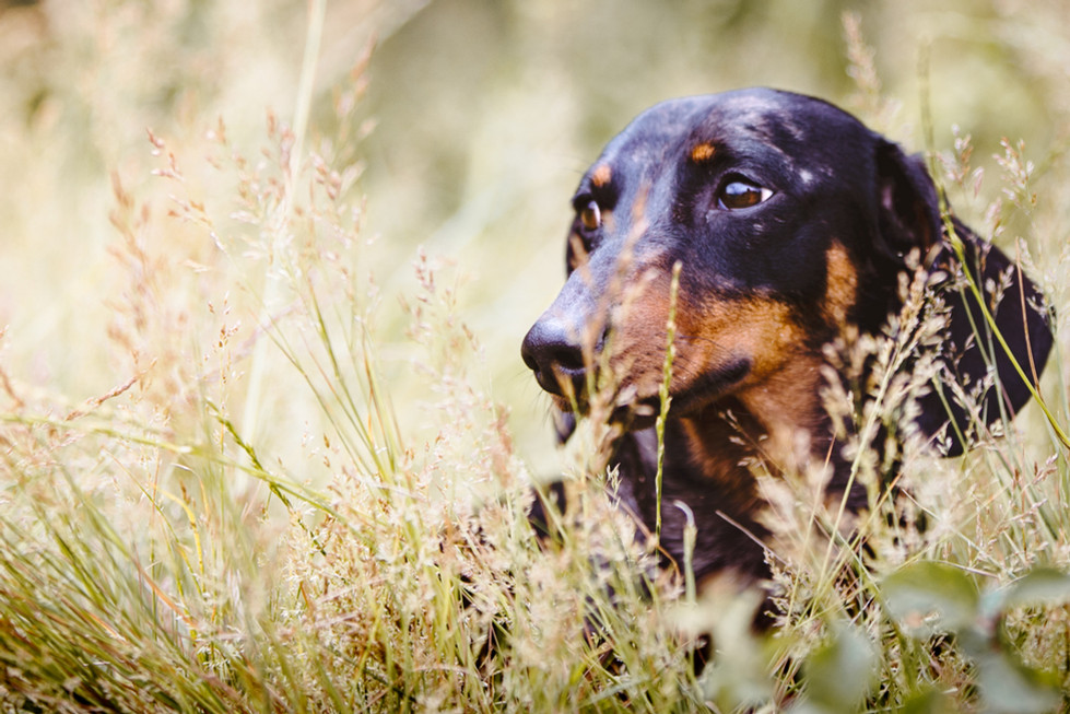Sausage in long grass