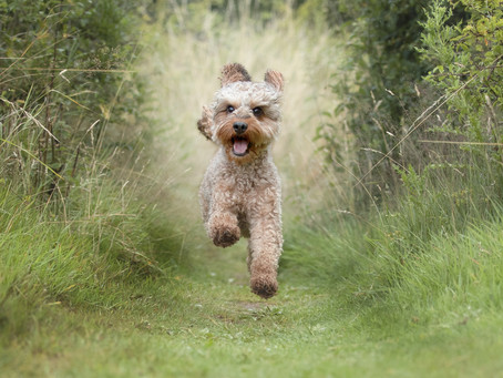 An Introduction to Doggo Photography