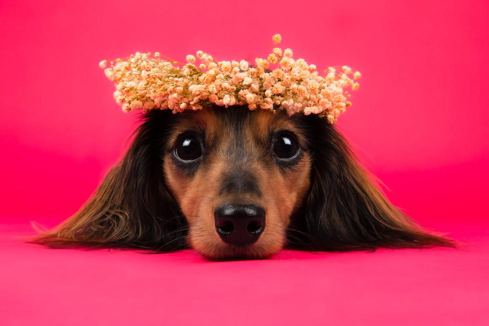 Flower Crown Stare