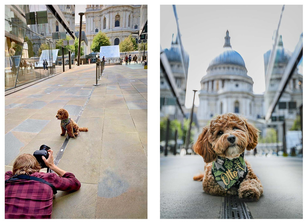 Puppy posing infant of St Pauls.