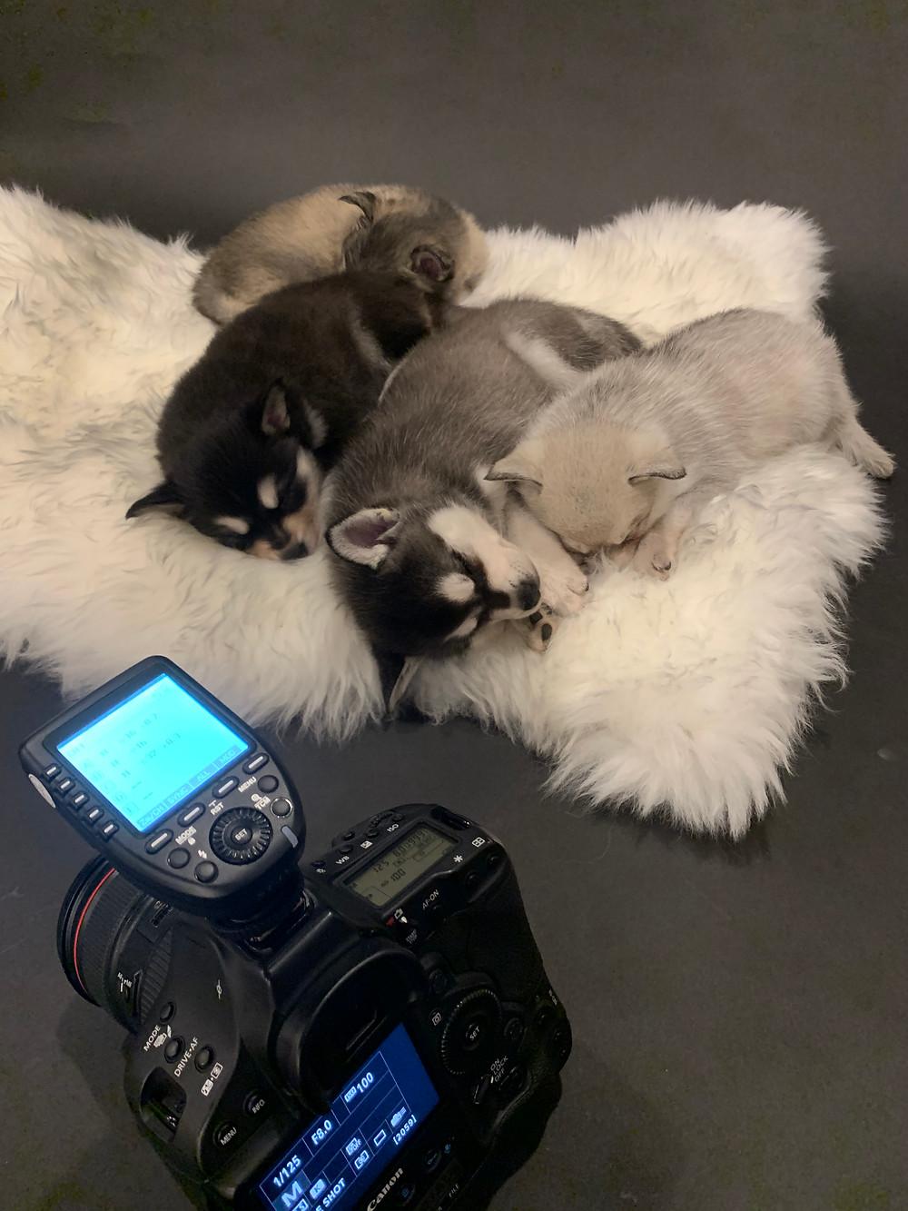 Puppies sleeping next to camera