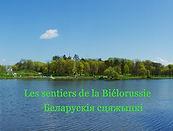 Lac belarus