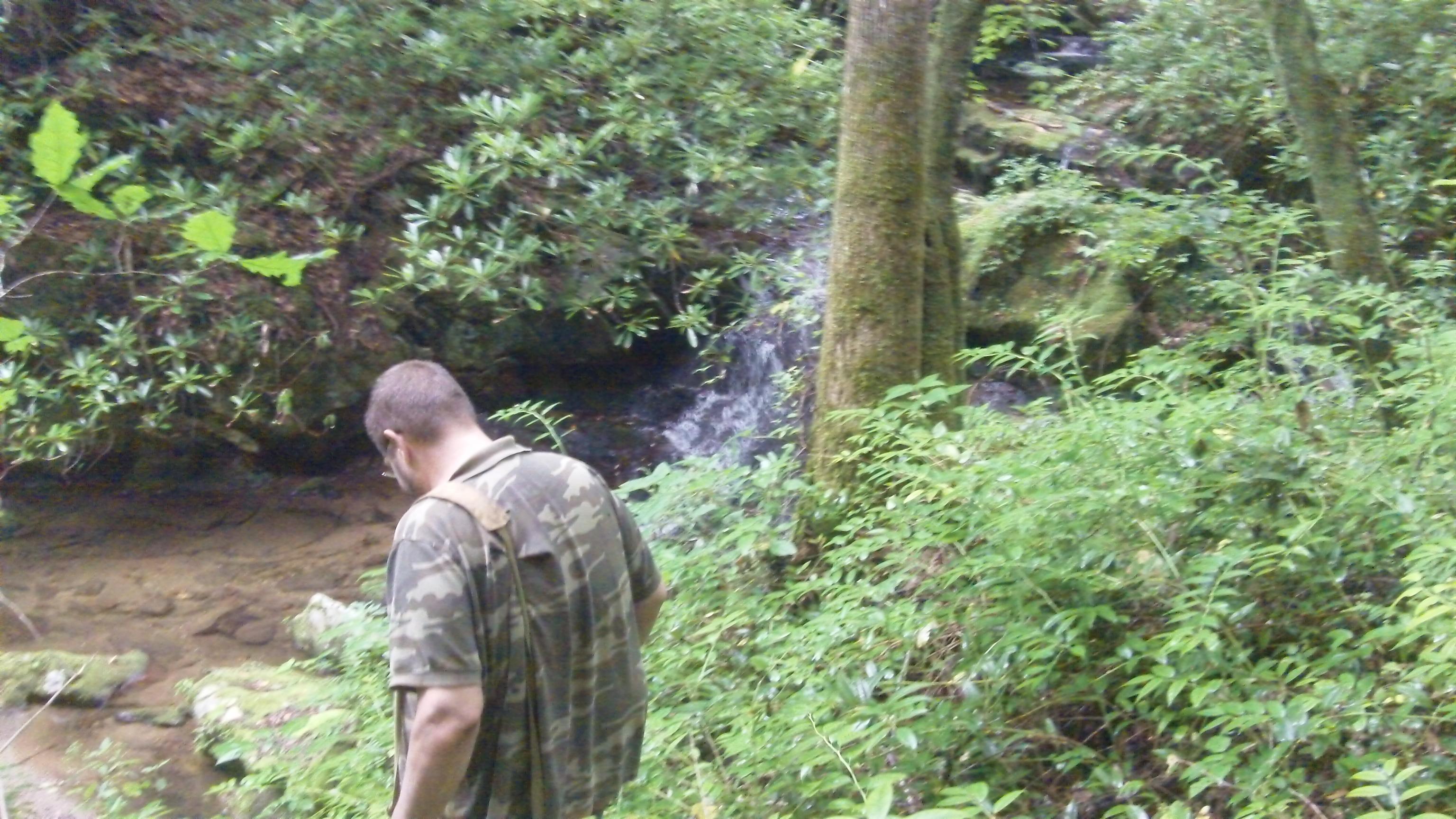 A Bear & a waterfall...