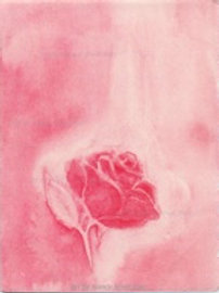 Rose Card Package of 10