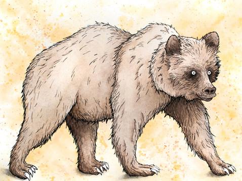 Bear_150ppi.jpg