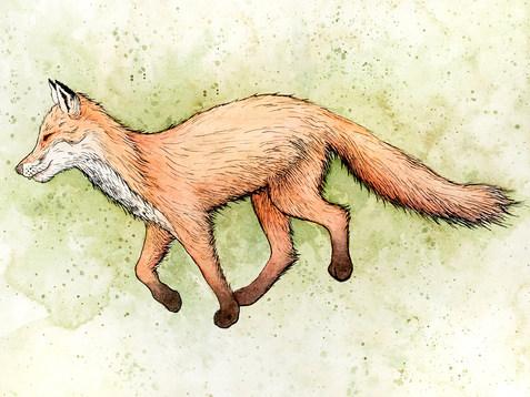 Fox_150ppi.jpg