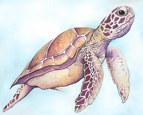 Watercolor Sea Turtle by Jordan Ellis