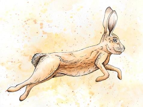 Hare_150ppi.jpg