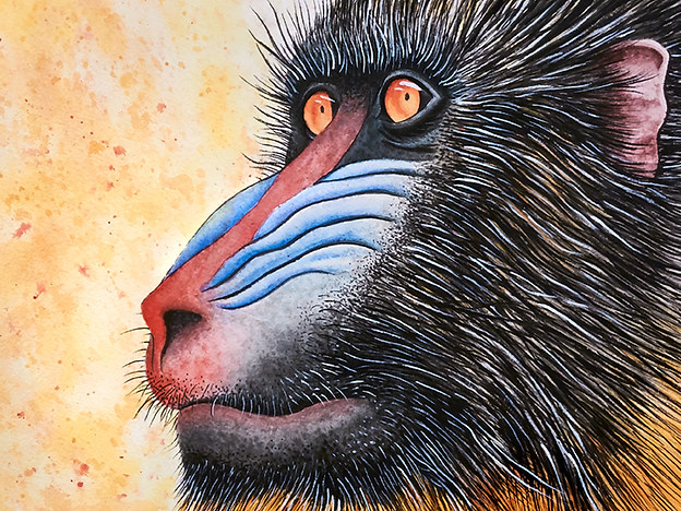 Mandrill Watercolor Painting
