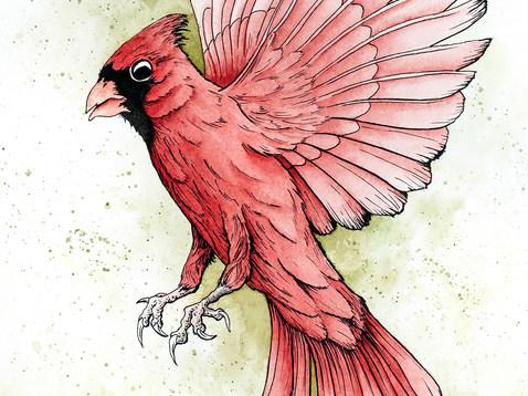 Cardinal_150ppi.jpg
