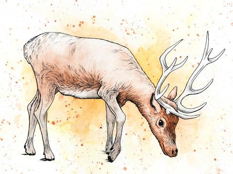 Deer_150ppi.jpg