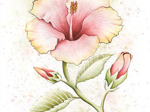 hibiscus8x10.jpg