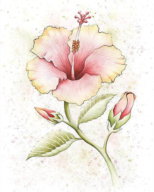 Watercolor Hibiscus Mushrooms by Jordan Ellis