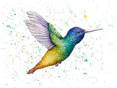 Humming Bird Watercolor Painting