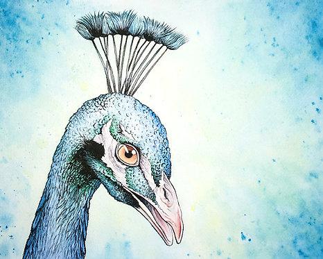Watercolor Peacock by Jordan Ellis