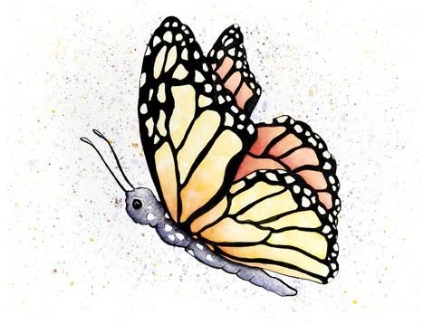 butterfly8x10.jpg