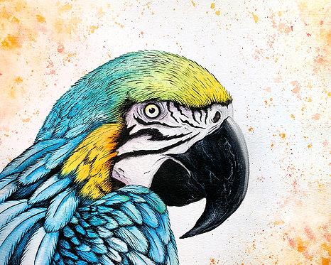 Watercolor Parrot by Jordan Ellis