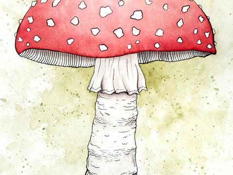 Mushroom_150ppi.jpg
