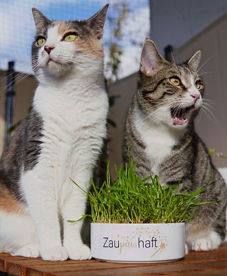 pawsonwood | Katzenaccessoires | Tassen, Näpfe, Holzbrettchen uvm.