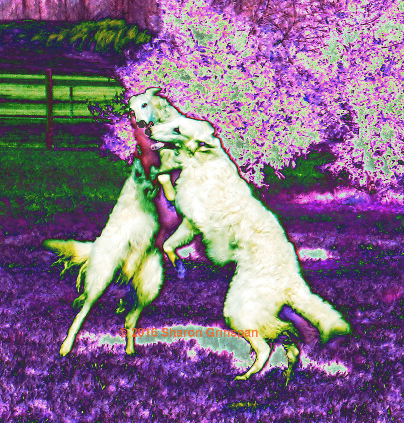 Dancing Dogs Under Purple Trees