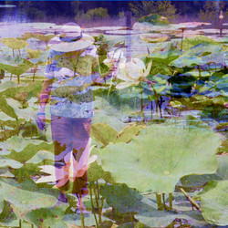 Lady of the Lily Pads