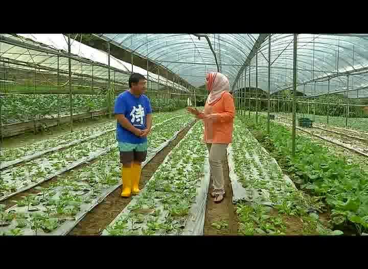 USAHAWAN #21 Cameron Organic Produce