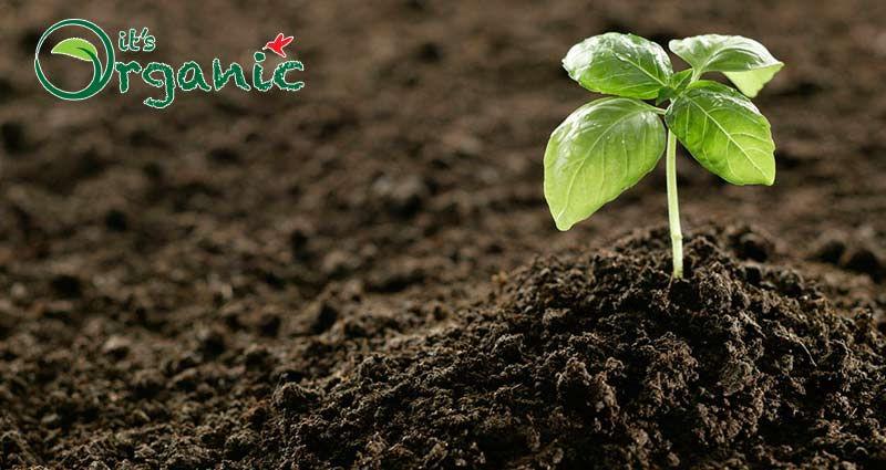 Soil-Fertility-itsorganic.jpg