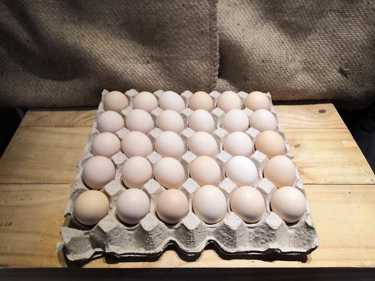 Organic Free Range Eggs (30 pcs/ tray)