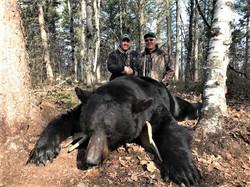 Bear 19 04 Peterson