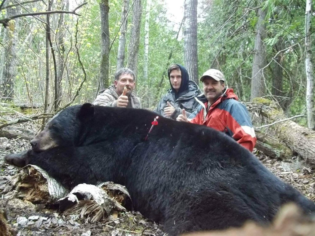 Bear 21 02 Seelig Shawn