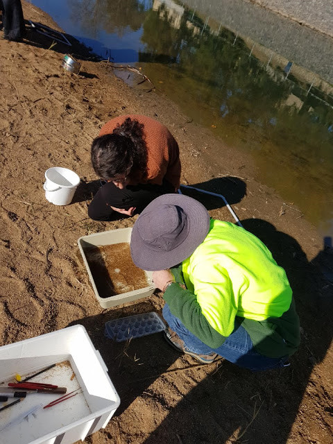 Microplastic being identified and picked out to be recorded