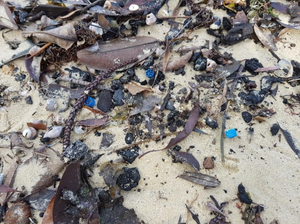 Among the leaves, rocks and seaweed, there are bits of plastic that have washed up on the beach