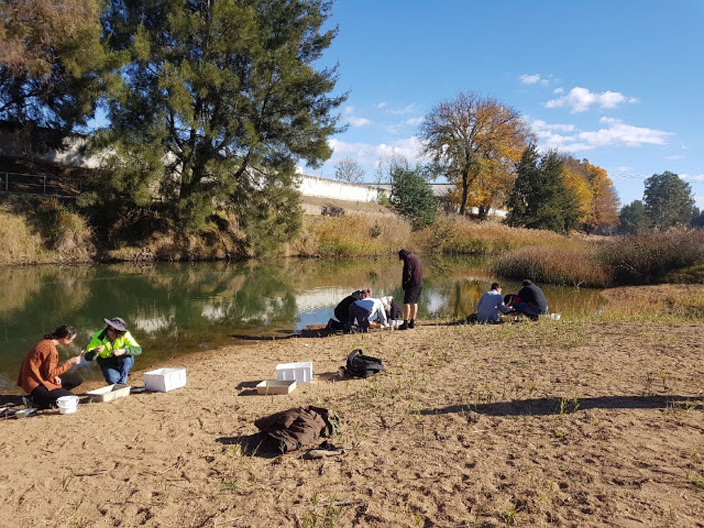 Getting stuck into finding microplastics along the bank of Macquarie River