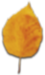 yellow-fall-leaf.png