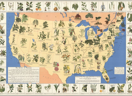 Curio: 1932 Map of Medicinal Plants