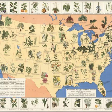 Curio: 1932 Map of Medicinal Plants