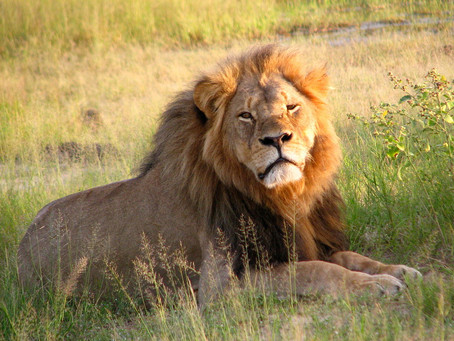 Outrage, Geography, and Cecil the Lion