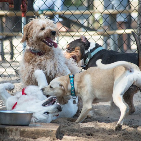 Dog Parks and the Urban Landscape