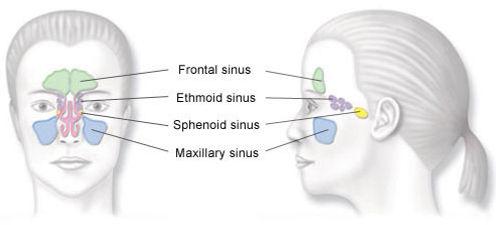 sinus_diagram.jpg